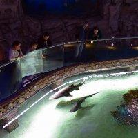 В океанариуме :: dindin