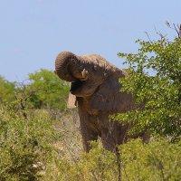 Животные Африки. :: Jakob Gardok