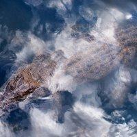 Крокодил в облаках :: slavado