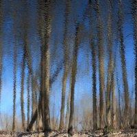 В весеннем лесу :: Сергей Григорьев