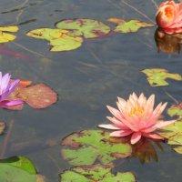 Небольшой пруд в Сароне :: Герович Лилия