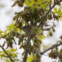 Найди птичку :: Тамара Бедай