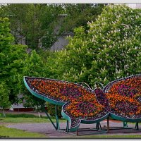Майская бабочка :: Сергей Щеблыкин