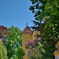 Цветут сирени и каштаны мир наполняя красотой... :: backareva.irina Бакарева