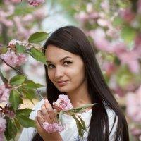 сакура :: Ольга Фефелова