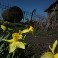 Ветер и цветы :: Николай Филоненко