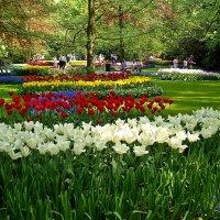 в цветочном раю :: Александр Корчемный