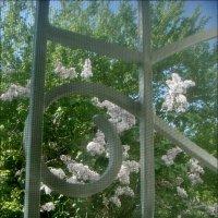 За моим окном расцветает бабушкина сирень... :: Нина Корешкова