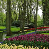 Сад Европы.Койкенхоф. Голландия.Весенние цветы. :: Людмила Шнайдер