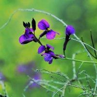 Неизвестный цветочек :: Игорь
