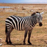 ЮАР! Национальный парк! :: Натали Пам