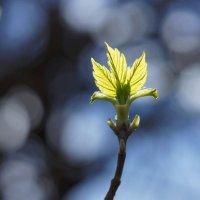 Снова весна :: Наталия Григорьева