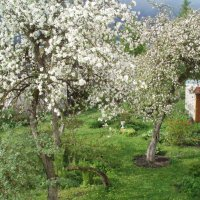 55 paralelė žydi / Spring on the 55 parallel (Karsakiškis, Lithuania) :: silvestras gaiziunas gaiziunas