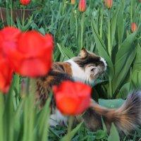 Кошка и тюльпаны :: Екатерина Ермилова