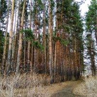 Природа дышит лишь одной неповторимою весной ... :: Татьяна Котельникова