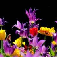 весенняя флора 5 :: Александр Прокудин