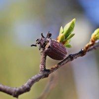 Первое появление листочков и насекомых :: Лидия (naum.lidiya)
