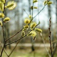 лес проснулся....пчелкой каждой...) :: Сергей Бойцов