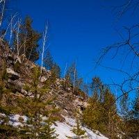 И на камнях растут деревья... :: Дмитрий Костоусов