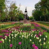 Тюльпаны. :: Anna Gornostayeva