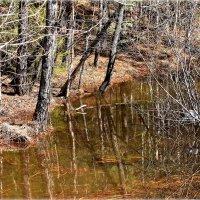 В лесу.. :: Александр Шимохин