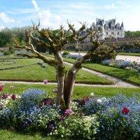 jardin de Chenonceau :: IrenKo