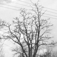 Tree :: Saint Alex