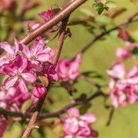Весна :: Sergey Polovnikov