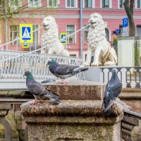 СПб. Пейзаж с голубями на фоне Львиного моста. :: Виктор Орехов