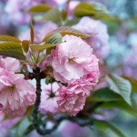Весна :: slavado