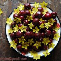Черешня в цветах :: Elena Gosteva