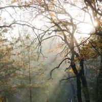Утро в лесу :: Ирина