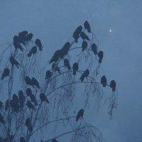 Дрёма в тумане :: Syntaxist (Светлана)