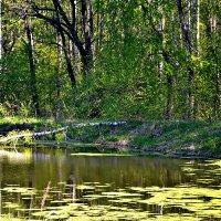 У пруда в мае. :: Михаил Столяров