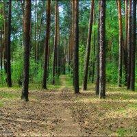 Май в лесу :: °•●Елена●•° ♀