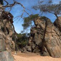И на камнях растут деревья :: Андрей Бондаренко