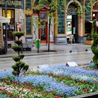 Весна в Будапеште. :: Светлана Кузьмина