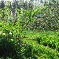 Весенний пейзаж :: Gen Vel