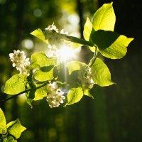 Forest :: Анастасия Пономарева