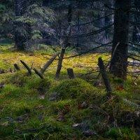 Где-то в глубине лесной :: Алексей (GraAl)