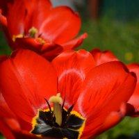 Цветы :: Сергей Щеглов