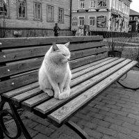 На улицах города :: Алена Малыгина