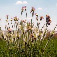 Степные цветы :: Игорь Александрович Оренбург