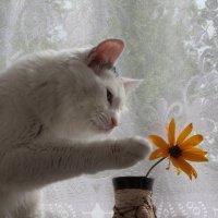 Прикоснуться к прекрасному... :: Грег
