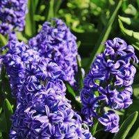 Аромат весны :: Natali Positive