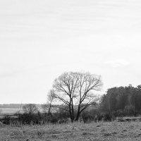 Мрачный..пейзаж..1 :: Аркадий Шведов