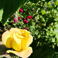 Солнечный цветок :: Mir-Tash