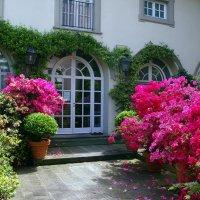 Жить  среди цветов :: Vanda Kremer