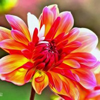 цветок :: ogurcovcki ogurcovcki