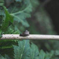 Тихо-тихо ползи, улитка, по склону Фудзи, вверх, до самых высот :: Юля Грек
